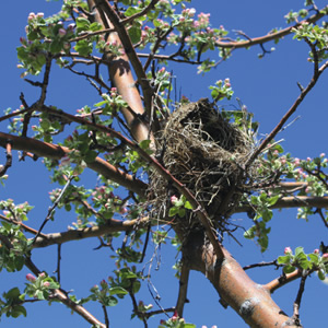 Tree with Bird Nest
