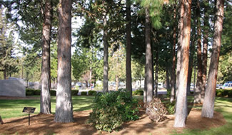 Sustainability Campus Trees